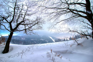 Zdjęcie w scenerii zimowej. Ujęcie pól i drzew.