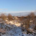 Zdjęcie przedstawia teren inwestycyjny przeznaczony na sprzedaż przez Starostwo Powiatowe w Dzierżoniowie. Teren w zimowej aurze, obrośnięty wysoką trawą i krzakami. W tle zakłady i dom jednorodzinny.