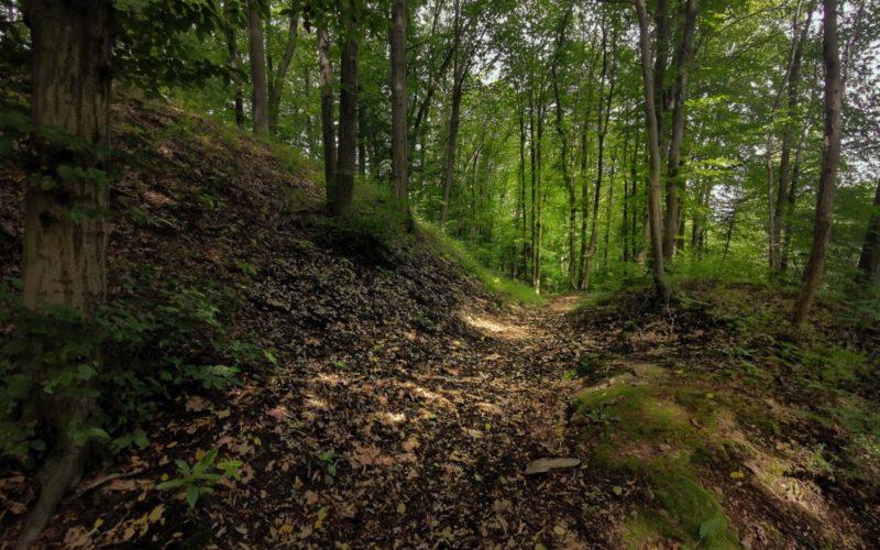 Zdjęcie ścieżki w lesie. W tle drzewa. Panuje półmrok