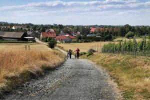 Droga polna w okresie letnim. Po obu stronach drogi pola uprawne. W oddali widać zabudowania mieszkalne na wsi.