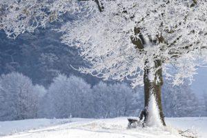 zimowy krajobraz. po prawej stronie drzewo zaszronione. na ziemi leży śnieg. w tle góry z ośnieżonymi drzewami.