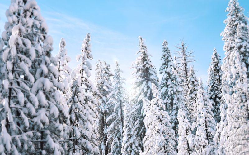 krajobraz górski w zimie. widać ośnieżone choinki.